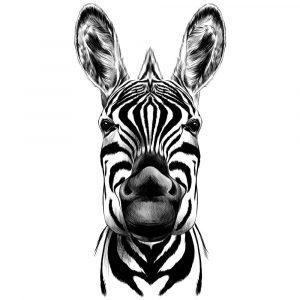 doenças raras a zebra